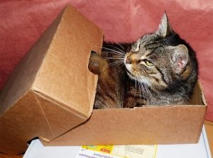 Preparing your cat for relocation include saving a box for them, too