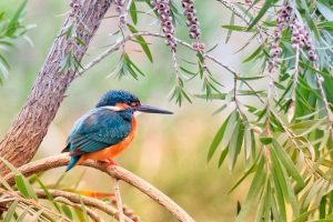 A Kingfisher bird found in Hong Kong.