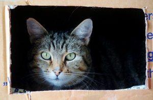 A cat in a moving box