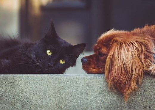 Pets Cat Dog - Tips for buying a pet-friendly home in Florida