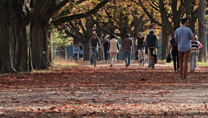 Trees, walking