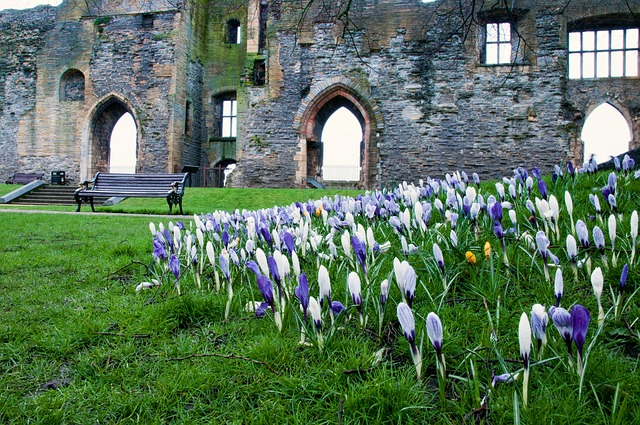 Flowers in the castle