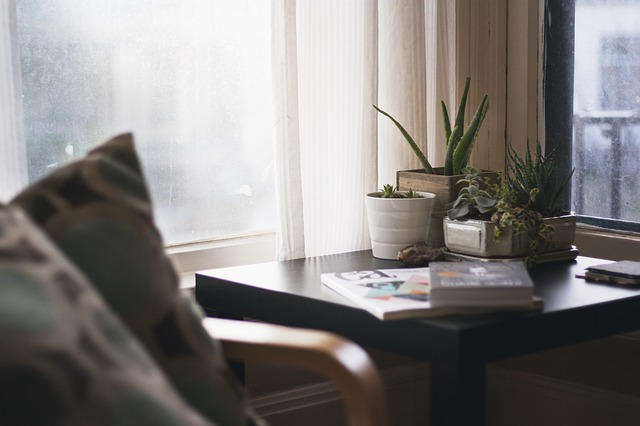 prepare your household plants for relocation