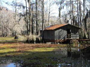 Bayou. Beautiful surroundings are another reason to move to Houma this year.