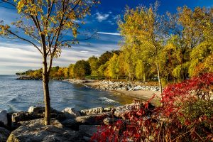 Nature in Ontario.